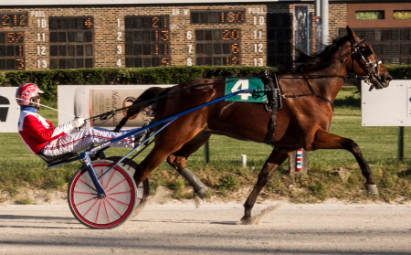 Fox Valley Gallant (Casey Leonard) looks to make it back-to-back winning ICF stake event when he goes to the gate in Sunday's $45,900 Cardinal trot for three-year-old colts and geldings. (For Footed Fotos)