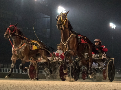 The Jamaica Patton Stable's Fox Valley Reggie (right) is shown with driver Kyle Wilfong proving best in an Hawthorne race, (Four Footed Fotos)