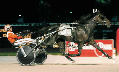 Erv Miller's Loyal Opposition (Andy Miller) was a multiple Super Night champion at Balmoral Park. (REB Photo)