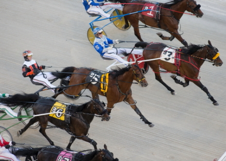 They'll be off and racing again at Hawthorne when the meet restarts this weekend. (Four Footed Fotos)