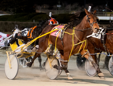 The Kim Roth trained mare Whiskersonkittens is shown here winning the 2016 Pretty Direct Late Closer Series Final with driver Bobby Smolin. (Four Footed Fotos)