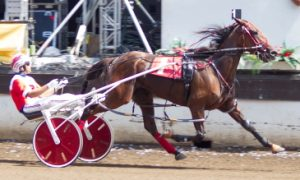 Fox Valley Charm (Ridge) followed Springfield's Aged Mare Pace crown with another at Du Quoin. (Four Footed Photo)