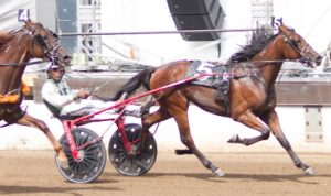 Primed N Powerful (Freddie Patton Jr) loves the front-end and he'll be there Wednesday afternoon. (Four Footed Photo)