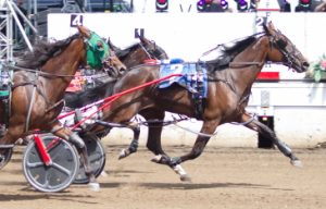 Springfield champion Artemesia needs a victory tonight to make the Incredible Tillie stake final. (Four Footed Photo)