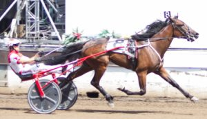 Springfield champion Polar B (Todd Warren) is one of Saturday's Cardinal Trot major contenders. (Four Footed Photo)