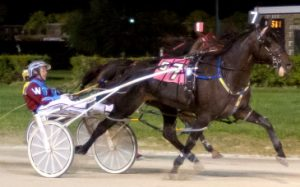 OK Heavenly looks for another Open Pace win tonight. (Four Footed Photo)