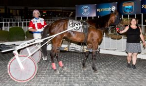 Leading driver Casey Leonard guided the Denny Taneyville trained pacer Fresh Squeezed to her first two Hawthorne wins. (Four Footed Photo).