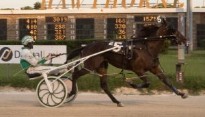 Filly Forty is the leading point earner of the Plum Peachy going into Friday's round of the stake series. (Four Footed Photo).