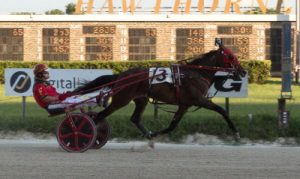 Mt Erie Mafia (shown here) and his stable-mate Cruzen Cassie are the Finn Racing Stable's hopefuls in tonight's 2-year-old Cardinal Trot Championship (Four Footed Photo).