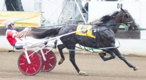 Unbeaten Springfield champion Fox Valley Gemini (Casey Leonard) goes for his eighth in a row tonight. (Four Footed Photo)