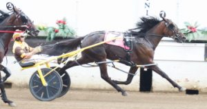Springfield champion The New Americana (Mike Oosting) returns to action this weekend in the third leg of the Incredible Tillie 2-year-old filly pace stake series. (Four Footed Photo)