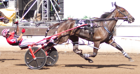 The Bob Walker Stable's Bucklegirl Bobette is being pointed for Hawthorne's 2018 winter meet. (Four Footed Photo).