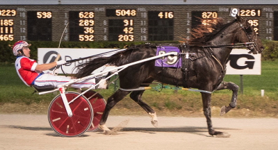 Fox Valley Gemini (Casey Leonard) capped a perfect freshman season with his ninth victory on Hawthorne's Night of Champions. (Four Footed Photo)