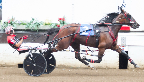 Last summer's three-year-old filly Springfield champion Boogie On own (Kyle Wilfong) goes postward in Saturday's first race Open III distaff pace feature. Kyle bagged three winning drives in last night's opening night card. (Four Footed Photo).