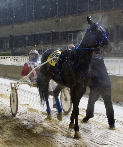 Picky Picky Valor, shown here with Casey Leonard when he finished in a triple dead-heat to win back on January 7, goes postward in Sunday night's Open III Trot eighth race headliner. (Four Footed Photo)