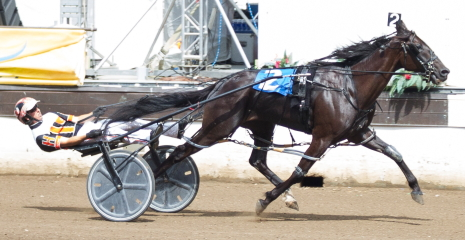 Captain Rhett, a starter in tonight's sixth race, is shown here striding out at Springfield last summer when he paced his 1:49.4 mile as a 3-year-old. Four Footed Photo