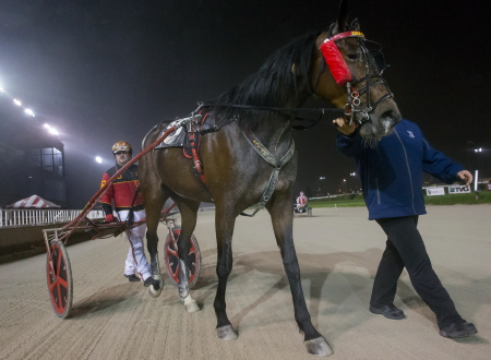 Driver Jared Finn leads Sunny Sasha to the winner's circle after the 19-1 longshot won the Daryl Busse trot series final last night. (Four Footed Fotos)