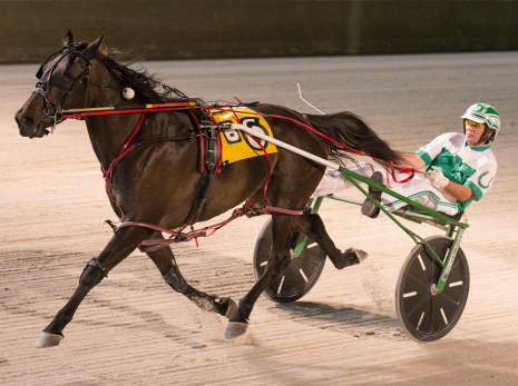 Allbeastnobeauty (Tim Curtin) goes for her third season win in a row in tonight's first $25,700 Violet stake division for ICF 3-year-old pacing fillies. (Four Footed Fotos)