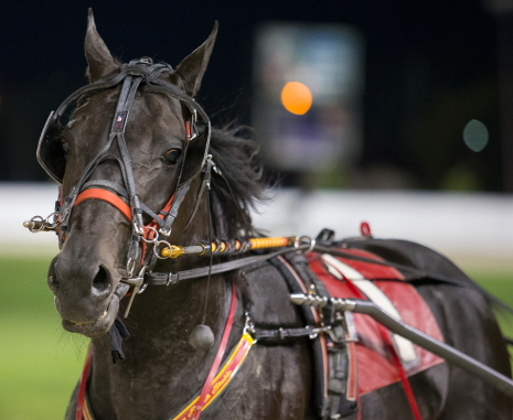 Perry Smith's Dakota Roadster looks to win back-to-back Hawthorne Open Paces Friday night with Cliff Bell at his lines. (Four Footed Fotos)