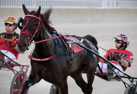 Good Design (Kyle Wilfong) was a determined winner of her Dygert leg last week and is the early favorite in tonight's first $23,500 Violet stake division. (Four Footed Fotos)