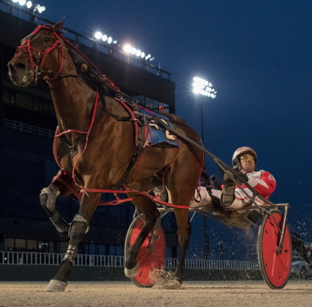 Perry Smith's Royale Rose (Travis Seekman) shows his winning Hawthorne form. He goes to the gate Friday night in the fourth race first Open Pace on the card. (Four Footed Fotos)
