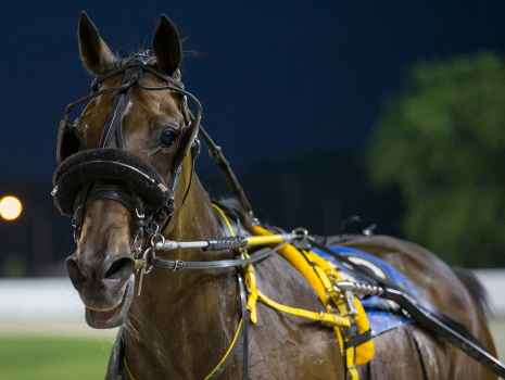 Account Hanover sets his sights on back-to-back Open pace victories Friday night for trainer Jim Eaton. (Four Footed Fotos)