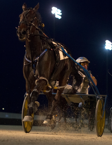 The high-flying ICF mare Bucklegirl Bobette (Ryan Anderson) returns to Hawthorne tonight where she won four consecutive races earlier for trainer Rob Rittof. (Four Footed Fotos)