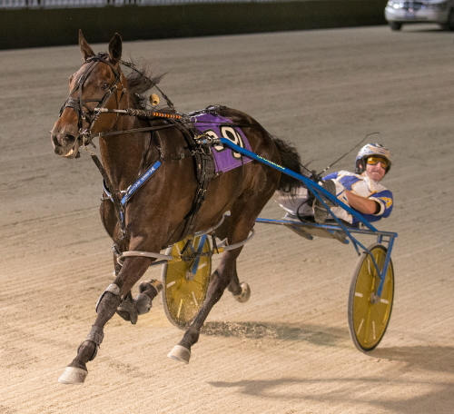 Bucklegirl Bobette and driver Ryan Anderson were all by themselves at the end of a 1:50.34 mile in last night's Open II for pacing fillies and mares. (Four Footed Fotos)