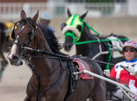 The 2-year-old trotting colt Fox Valley Pisaco (Casey Leonard) looks for his third consecutive ICF stake victory Sunday night. (Four Footed Fotos)