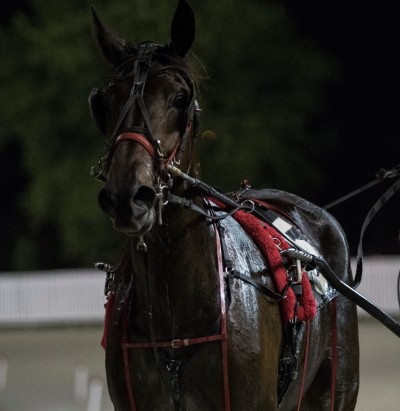 The Alan Bowen stable's Skeeter Machine looks for a repeat victory in the Plum Peachy stake series when the ICF sophomore filly goes postward in Saturday's seventh race first division. (Four Footed Fotos)