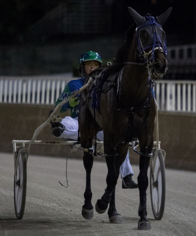 The Sis Master, trained by her driver Michele Morgan), has her sights set on another victory at Springfield Saturday'. (Four Footed Fotos)
