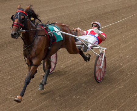 Casey Leonard was in a prone position with Illinimight at the finish of his Springfield championship. Next up for the Mike Brink trainee is today's Pronto Don 3-year-old colt and gelding trotting stake at Du Quoin. (Four Footed Fotos)