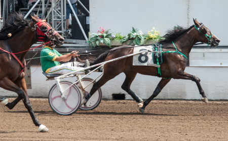 Louzotic (Steve Searle) looks to make it five consecutive victories in today's $27,500 final of the ICF 2-year-old filly trot. Mike Oosting will drive today. (Four Footed Fotos)