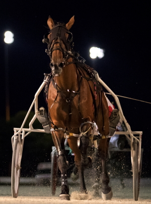 The Nelson Willis Stable's Fox Valley Halsey guns for her fourth consecutive victory in Friday night's fourth leg of the Incredible Tillie stake series state bred freshman filly trotters. (Four Footed Fotos)