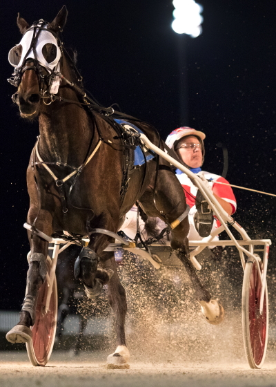 Fox Valley Gemini (Casey Leonard) bounced back with a strong victory last week and has his sights set on Saturday's $135,000 Incredible Finale 3-year-old colt pace championship. (Four Footed Fotos)