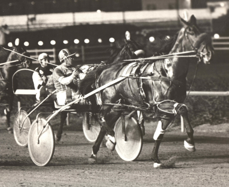 Smashing Don (Jerry Graham) was still going strong at the age of nine. Here's a 1977 photo of the pacer winning a Sportsman's Park Invite before a crowd of 16,886. That's Pacing Boy (No. 2 Del Pletcher) behind him. Not pictured is the runner-up Misty Raquel, driven by Jerry's brother Tom Graham. (Pete Luongo Photo).