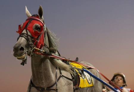 The striking gray pacer Stonedust (Casey Leonard) showed in his Hawthorne debut that he'll be a force on Saturday's Night Of Champions. Four Footed Fotos)