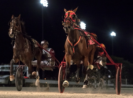 Trixie's Turno (No. 7, J D Finn) held off Foxvalleyrushhour (No. 8, Juan Franco) in Saturday night's first division of the Kadabra stake series for ICF freshman trotting colts and geldings. (Four Footed Fotos)