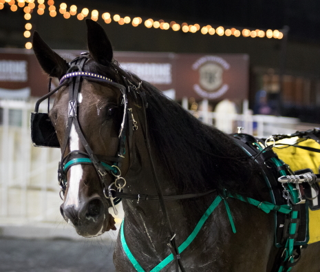Louzotic has the look of a champion for trainer Steve Searle and she was just that last season when she was named the Illinois 2-Year-Old Trotting Filly of the Year for her Flacco Family Farms owners. (Four Footed Photo)