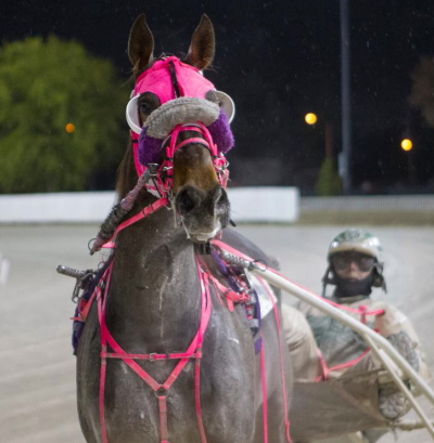 Deena Cozzi's Admit, shown here after winning the first leg of the Tony Salvaro with driver Tim Curtin, has her sights set on Sunday's $12,200 final. (Four Footed Fotos)