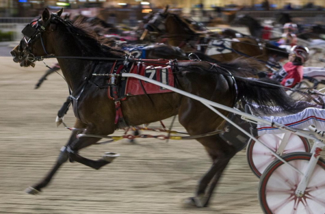 Fox Valley Minka sprints out at the start of last week's opening round of the Dave Magee series where the 3-year-old posted a second straight win at the Hawthorne meet. (Four Footed Fotos)
