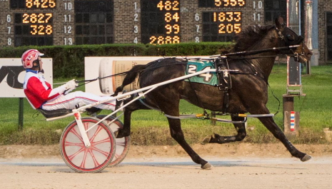 Mike Paradise series champion Fox Valley Triton (Casey Leonard) is the 4-5 morning line favorite in Friday's second race initial Cardinal pacing stake. (Four Footed Fotos)