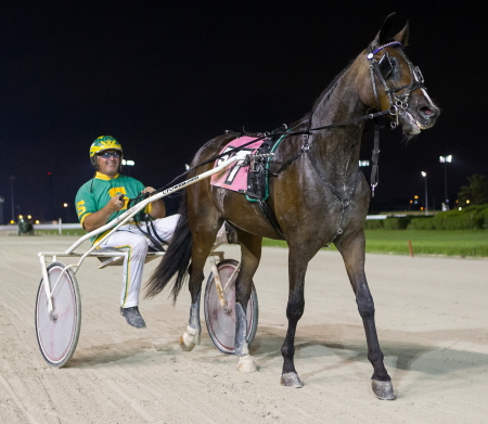 Trainer Steve Searle is shown leaving the Hawthorne winner's circle with his star trotting filly Louzotic. She goes after her fourth straight ICF stakes victory in tonight's second leg of the Beulah Dygert Memorial. (Four Footed Fotos)