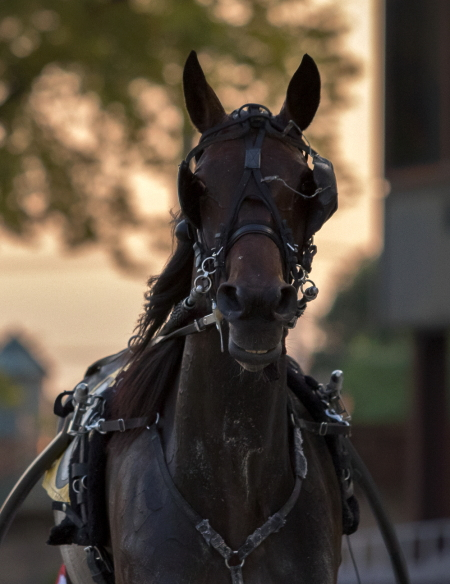 """Anna's Lucky Star aims to keep her title as """"Illinois Trotting Queen"""" with a victory in tonight's $45,000 Plesac aged trotting stake. (Four Footed Fotos)"""