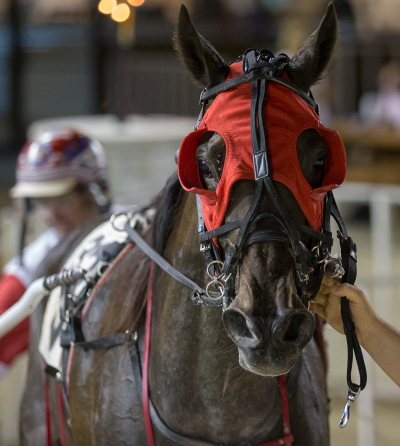The Terry Leonard Stable's Char N Mar will open as the 9-5 favorite in Saturday's tenth race, the $20,000 second Tony Maurello stake elimination for aged filly pacers. (Four Footed Fotos)