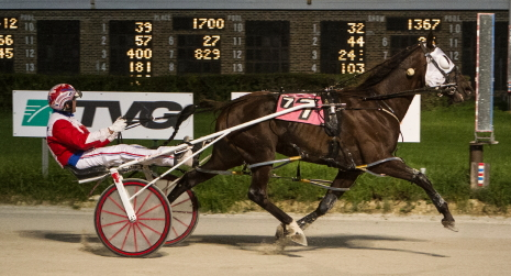 Fox Valley Gemini (Casey Leonard) sped to a career fastest 1:50 flat mile in the Robert S. Molaro Memorial Championship. (Four Footed Fotos)