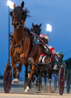 Tonight's tenth race ICF pacing mare JB's Shooting Star (Travis Seekman) is a candidate for next week's Tony Maurello Night of Champions stake eliminations. (Four Footed Fotos)
