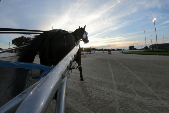At long last there is a brighter future ahead for Illinois harness racing. (Four Footed Fotos)