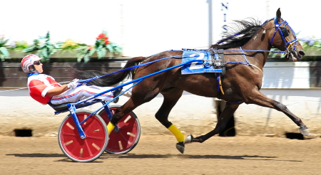 The Gerald Hansen stable's Talk About Valor (Casey Leonard) shows off his winning form at this year's Springfield State Fair. (Four Footed Fotos)