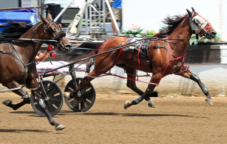 You'remyhearthrob, shown here at the end of his 1:49.4 mile at the Illinois State Fair, returns to Springfield Saturday with driver Kyle Wilfong for a Fall Review event. (Four Footed Fotos)